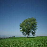 風景写真のサンプル
